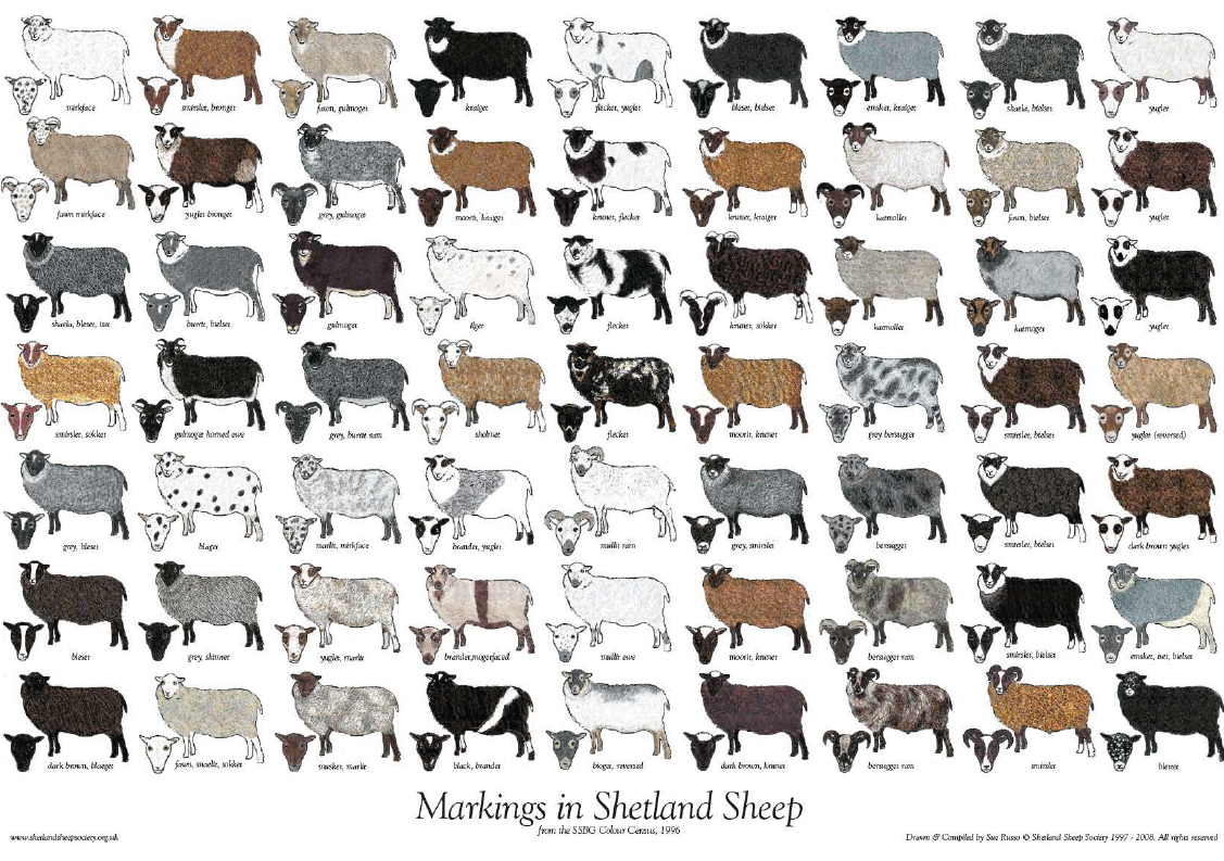 Colour and Markings Poster