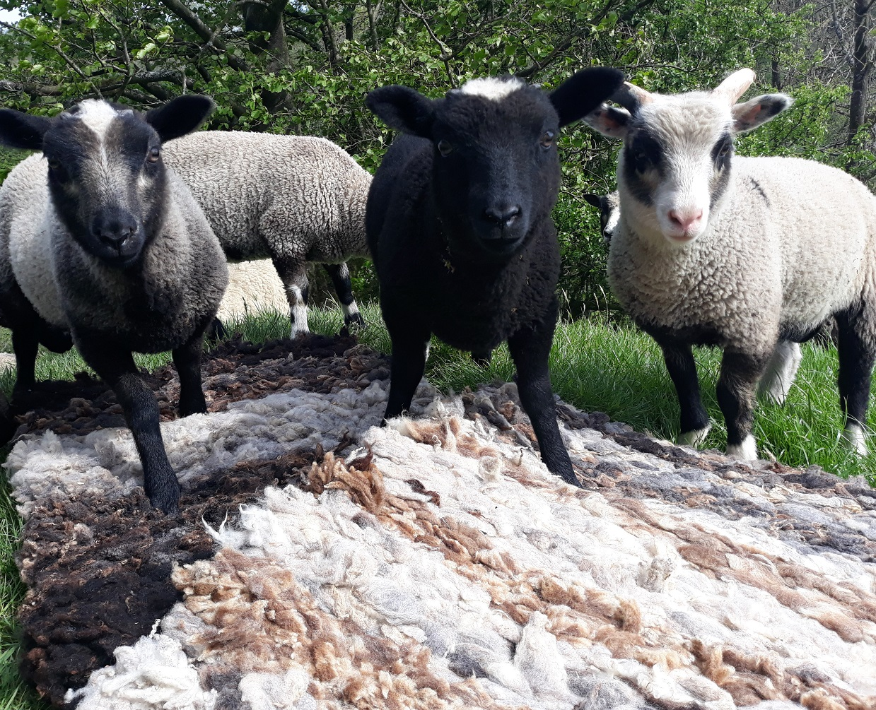 Handmade wool rugs and fleeces for sale - North Cumbria